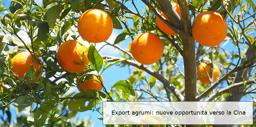 Export agrumi in Cina
